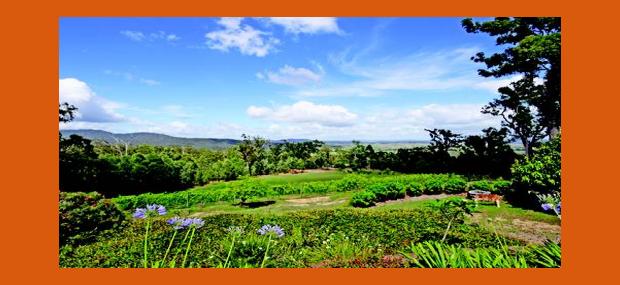 Wallaby-Ridge-Retreat-Gold-Coast-Scenic-Rim-Accommodation.png