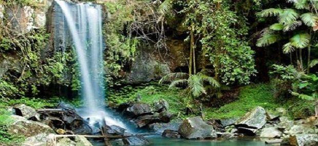 Southern Cross 4WD Gold Coast Rainforest Tour.jpg