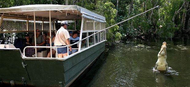Hartleys-Crocodile-Adventures-Palm-Cove-Day-Tour