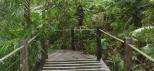Skyrail Gondola Cairns Rainforest Boardwalk.jpg