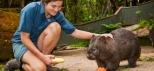 kuranda-austarlia-wombat