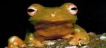 Scenic Hinterland Glowworms Tour.jpg