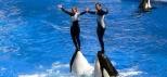 Gold-Coast-Sea-World-Whale-show