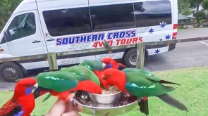 Southern Cross 4WD Tours Window to the Wilderness Rainforest and Wildlife Tour