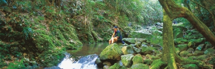 gold coast hinterland things to do